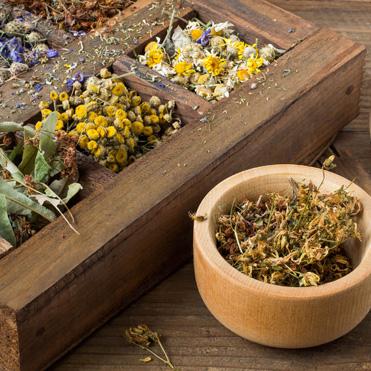 F & EPC - Medicinal Plants